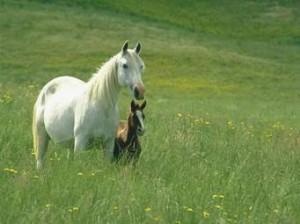 is.jpg a horse